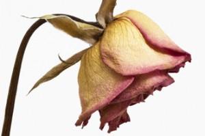 Single women often regret failed romances