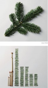 Before & after -- how many pine needles on that branch?