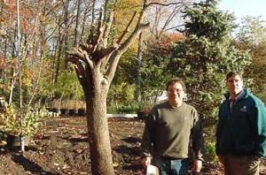 The survivor tree at Ground Zero
