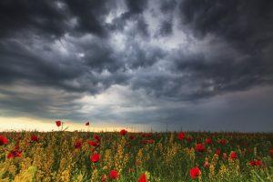 dark-clouds-storm-flowers-sad