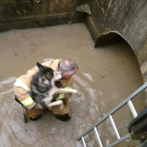 He risked his life for a dog caught in the storm.