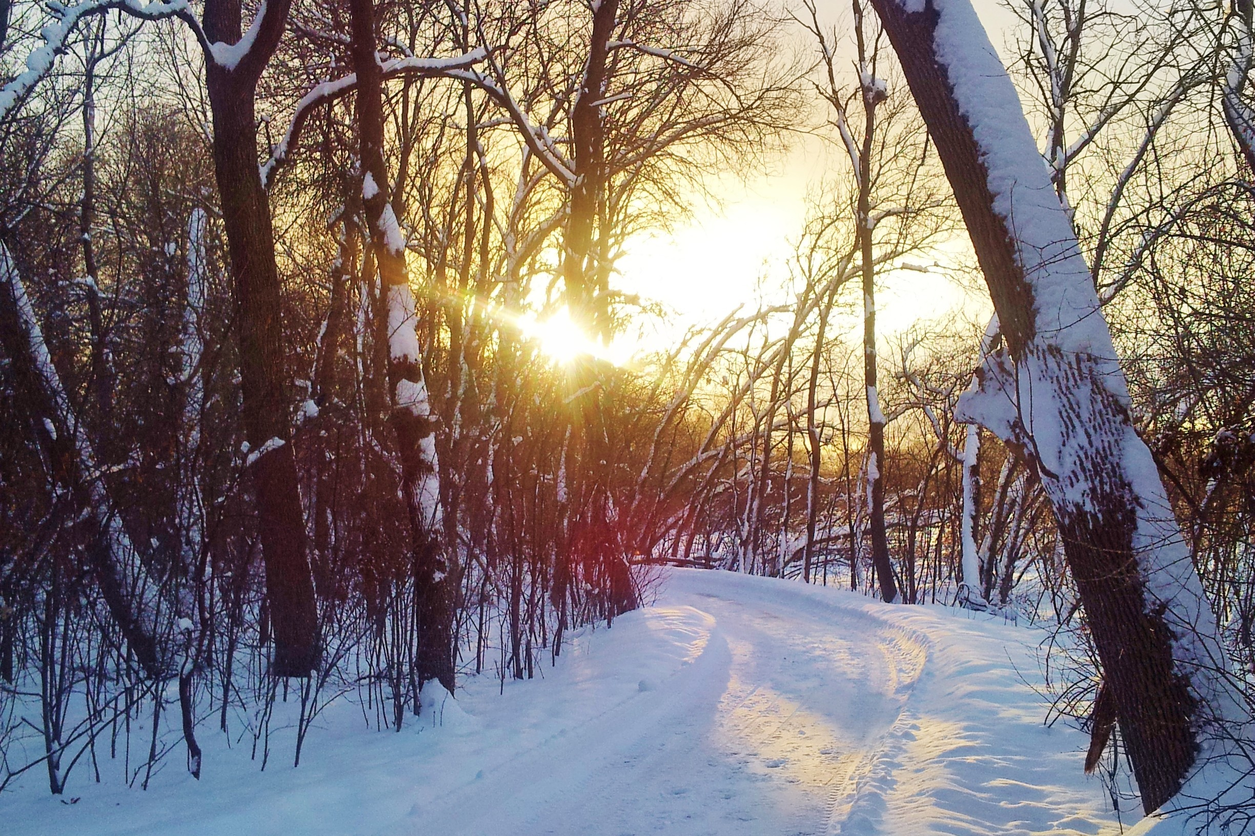 A Snowy Walk Refocused My Lenten Journey