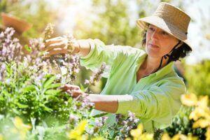 Beautiful woman pruning flowers in the garden