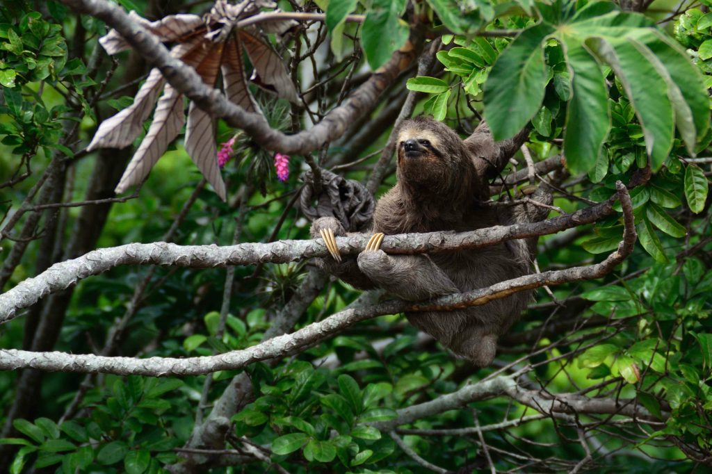 Sloth Is Why You Are Sad